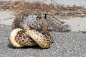Comportement : l'instinct de survie des animaux sauvages