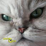 Test : votre chat souffre-t-il de problèmes psychologiques graves ?