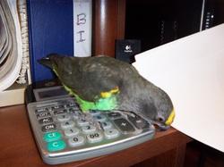 oiseaux eleve a la main