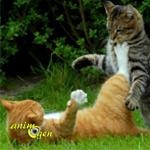 Causes d'agressions entre chats : le territoire