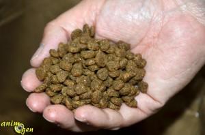 alimentation-croquettes-chat-Iams-composition-test-avis-prix-poids-ration-âge-animal-animaux-compagnie-animogen-6