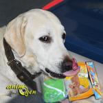 Friandises et accessoires pour chien : assortiment Vitakraft spécial Coupe du Monde (test, avis, prix)