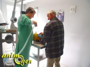 Santé en images : comment se déroule l'anesthésie durant l'opération d'un perroquet ?