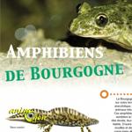 """Exposition """"Sur la route des Amphibiens de Bourgogne"""" à Autun (71), du mercredi 01 er janvier au 31 décembre mercredi 2014"""