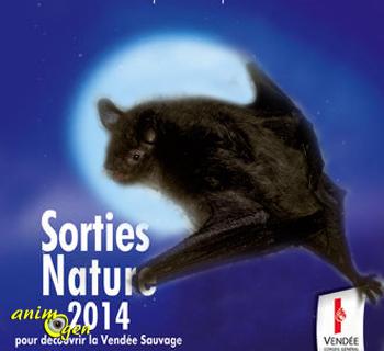 """Sortie Nature """"Chauve-souris, entre mythe et réalité"""" à Saint Laurent sur Sèvre (85), les vendredi 29 août et 19 septembre 2014"""