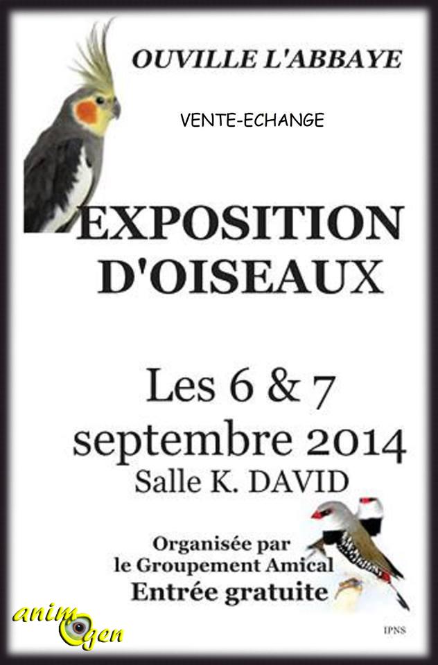 3 ème Exposition d'oiseaux à Ouville l'Abbaye (76), du samedi 06 au dimanche 07 septembre 2014