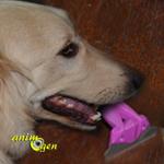 Accessoire pour chiens : brosse Ween, pour éliminer les poils morts