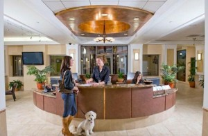 Un hôtel de luxe pour chiens et chats, pour des vacances de rois !