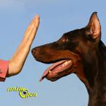 Les problèmes de comportement liés à la communication entre maîtres et chiens
