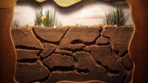 La fourmilière, un microcosme complexe à observer chez soi