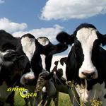 La guerre du pet est déclarée contre les vaches et moutons de Nouvelle-Zélande