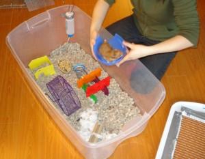 Comment faire se reproduire des hamsters en captivité ? (chaleurs, fécondation et accouplement)
