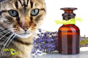 La toxicité des huiles essentielles pour les chats