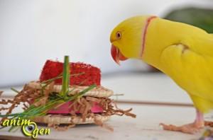 Jeu de foraging pour perroquets : hamburgers en feuille de bananier, papier, loofah, raphia