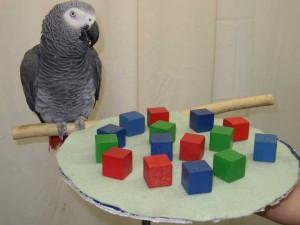 Quel est le rôle de l'objet dans le jeu chez les animaux juvéniles ?