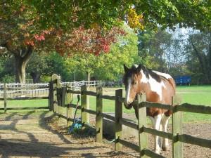 Accueillir son cheval chez soi, un engagement au quotidien