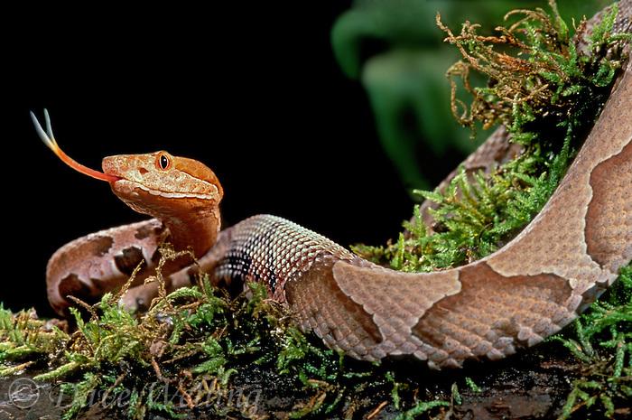 """Résultat de recherche d'images pour """"animaux serpent"""""""