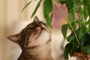 Nuisances domestiques : lorsque chats et plantes ne font pas bon ménage (ingestion, risques, solutions)