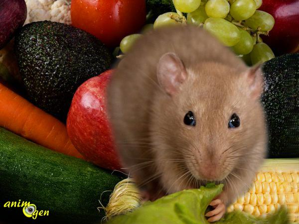 Alimentation : liste des fruits, légumes et herbes autorisés pour nos rats de compagnie