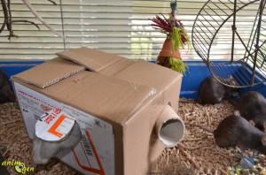 Fabriquez une cabane en carton avec passage secret pour vos rongeurs