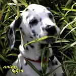 L'automédication chez les animaux (première partie) :  un comportement surprenant