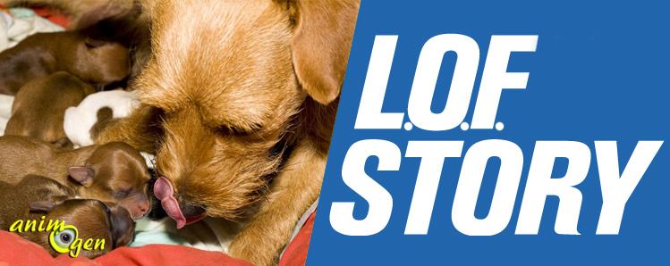 Comment inscrire au L.O.F. un chien dont les origines ne sont pas certifiées ?