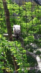 Du zoo de Vincennes au Parc zoologique de Paris, un glissement de perspective