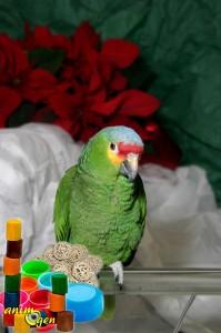 Jouets et accessoires : quelles matières utiliser pour nos rongeurs, lapins et perroquets ?
