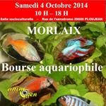 Bourse aquariophile à Morlaix (29), le samedi 04 octobre 2014