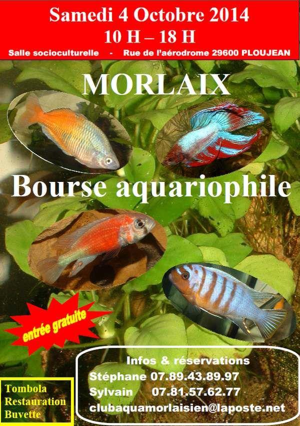 Bourse aquariophile morlaix 29 le samedi 04 octobre for Vente aquariophilie