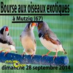 34 ème Bourse aux oiseaux exotiques à Mutzig (67), le dimanche 28 septembre 2014