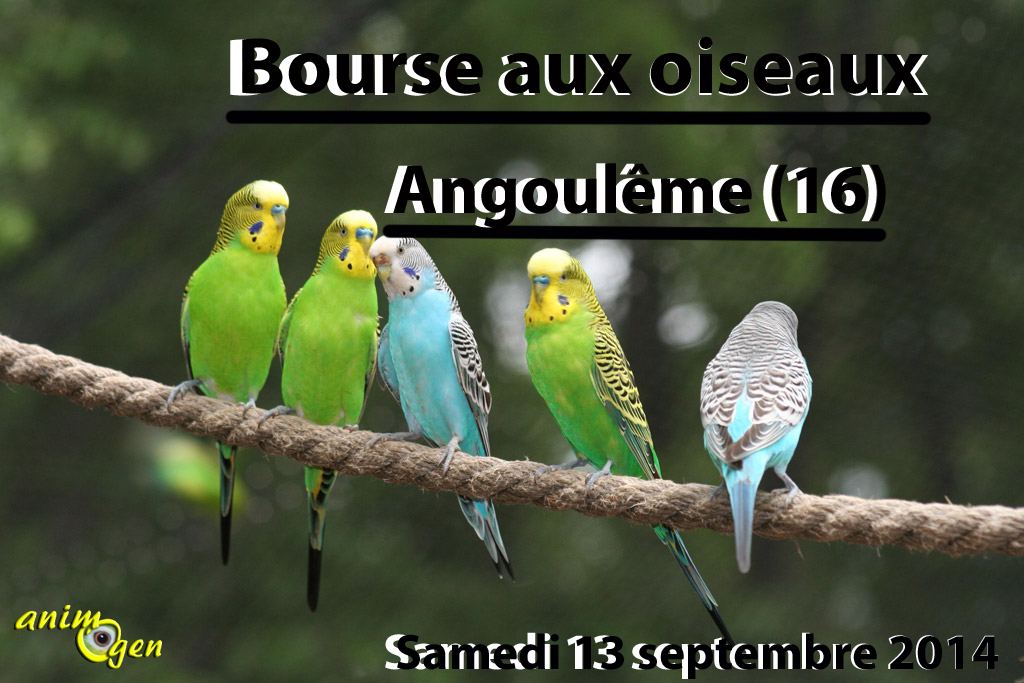 Bourse aux oiseaux à Angoulême (16), le samedi 13 septembre 2014