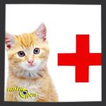 Santé : le pouvoir détoxifiant du charbon actif au bénéfice de nos chats et chiens