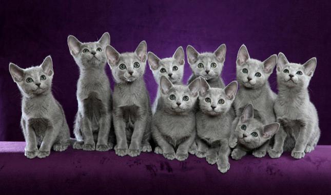 Comment choisir un chaton lors d'un achat ou d'une adoption ?