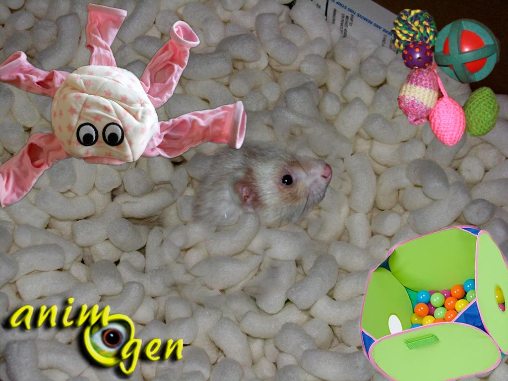 Comment renouveler les jouets de nos furets pour les amuser ?