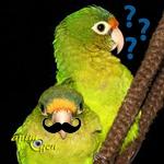 Les perroquets reconnaissent-ils leurs semblables uniquement grâce à des critères physiques ?