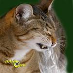 Trouble du comportement alimentaire chez les chats : le PICA