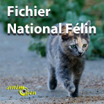Identification des chats : le Fichier National Félin