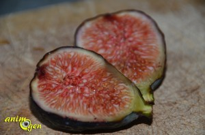 La figue fraîche, une bouffée de vitamines pour nos perroquets