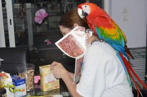 Le foraging, art de vivre et activité ludique pour nos perroquets