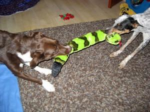 Pourquoi certains chiens en empêchent-ils d'autres d'approcher jouets, nourriture ou autre bien ?