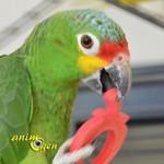 Jouet de patte à fabriquer pour nos perroquets : tutti frutti en ronds de serviettes