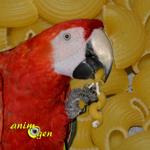 Fabrication de jouets de pâtes pour nos perroquets et rongeurs