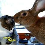 Le géant des Flandres, un petit lapin qui devient très grand