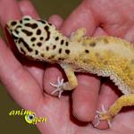Santé : les parasites internes chez nos geckos de compagnie (causes, symptômes, prévention)