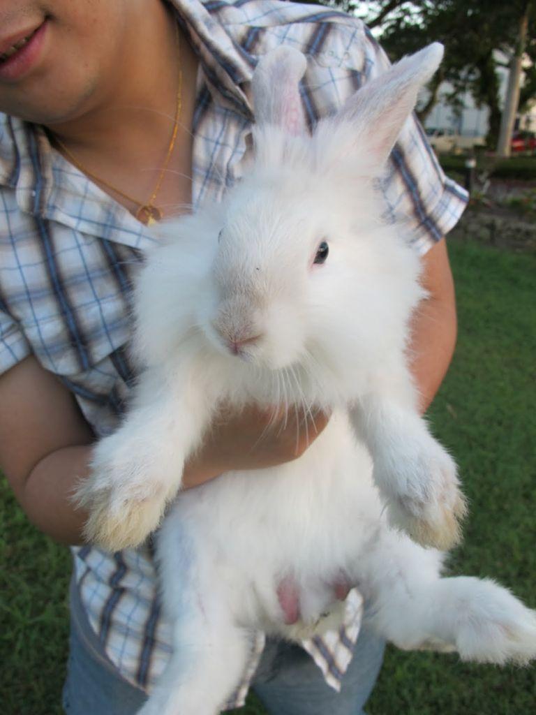 Santé : cassure et fracture des os chez les lapins de compagnie