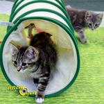 La période de la socialisation chez le chaton, une empreinte pour la vie