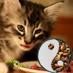 A quel âge les chatons peuvent-ils commencer à consommer des aliments solides ?