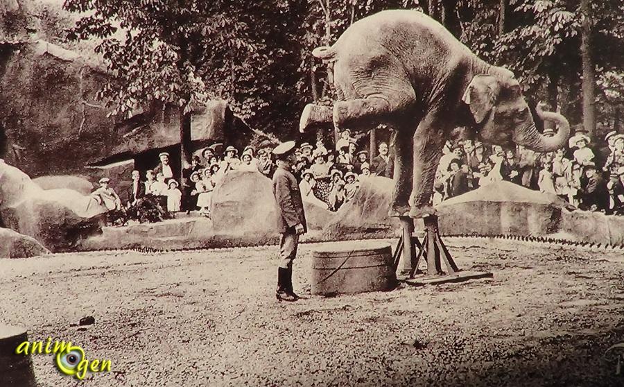 Perspective Escalier : Du zoo de vincennes au parc zoologique paris un