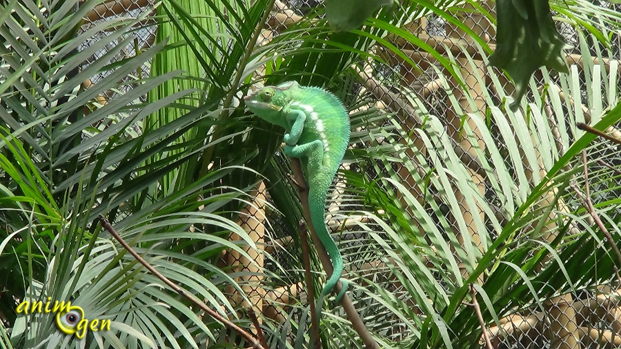 Du zoo de vincennes au parc zoologique de paris un for Animaux jardin des plantes